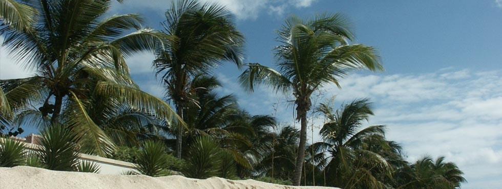 Palmiers de Baie aux Prunes