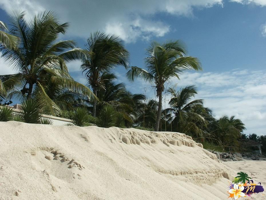 Palmiers en bord de plage