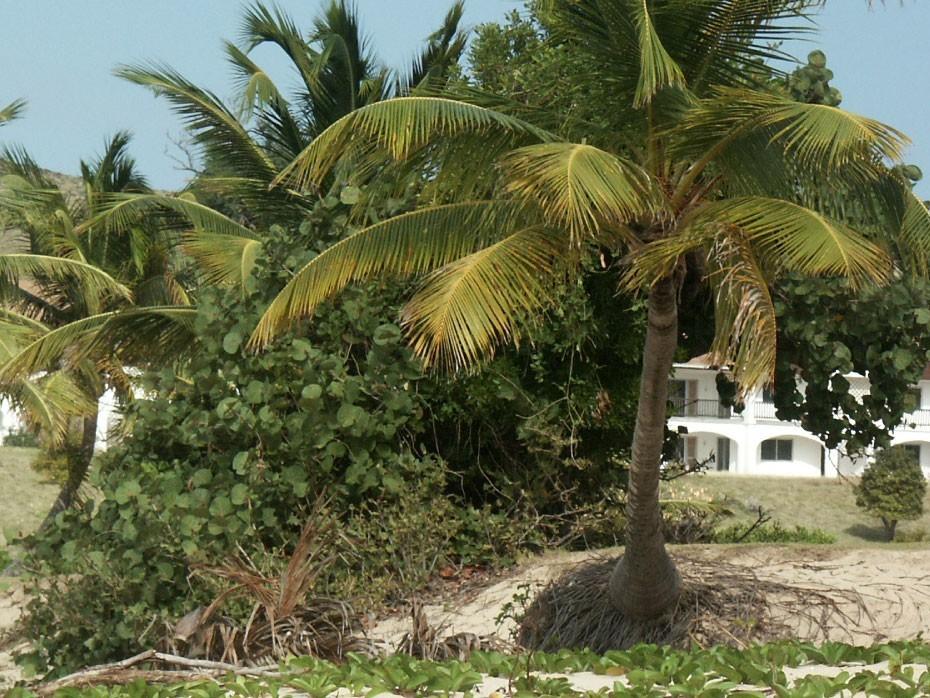 Palmiers en bordure de plage